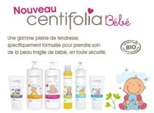 centifolia bébé